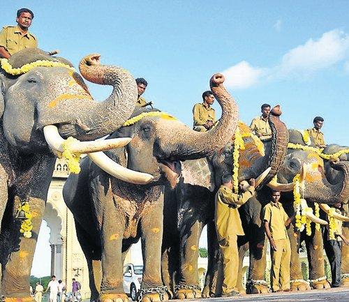 Second batch of elephants reach city