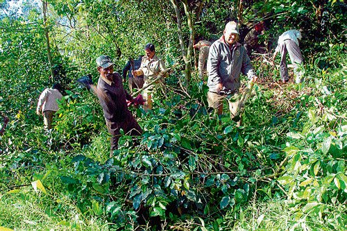 Forest dept clears 33 acre encroached land