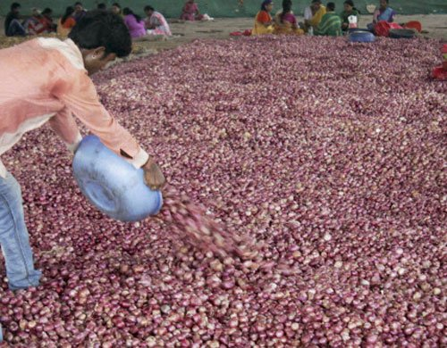 Onion prices sting; political class pays  lip service