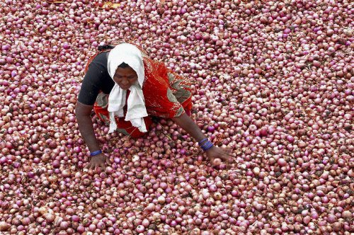 Skyrocketing onion prices may ease after Diwali: Govt