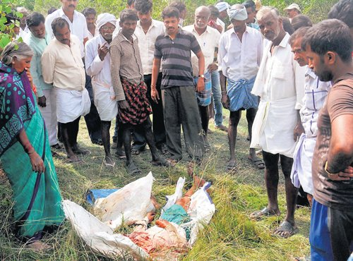 When villagers bayed for man-eater's blood
