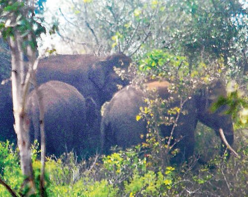 Herd of elephants sent back to forest