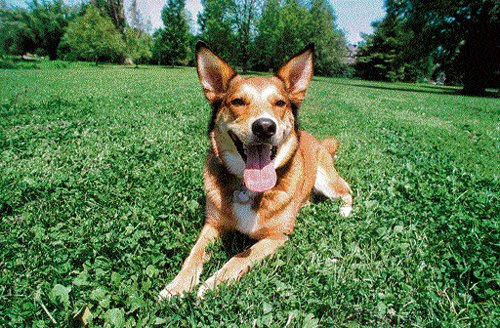 Tracking  the origin  of canines