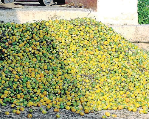 Centre won't classify areca nut as 'injurious' substance: CM