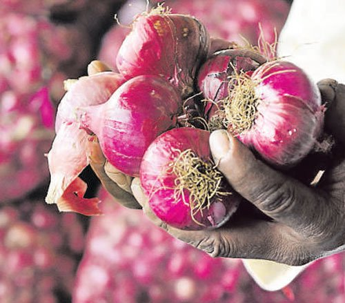 Onion prices dip to Rs 3 per kg
