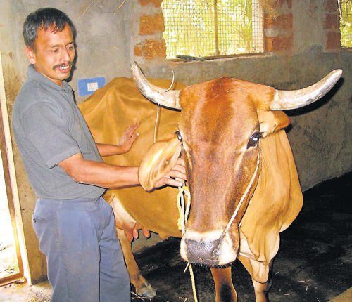 Innovation, grafting helps NR Pura farmer taste success