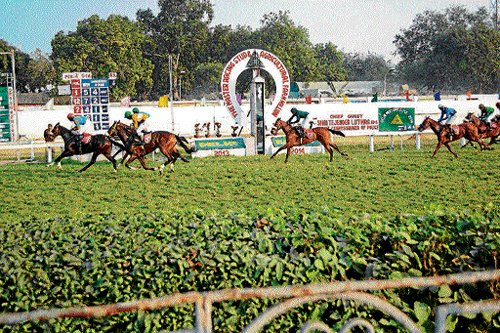 Horse racing gets a leg-up from celebs