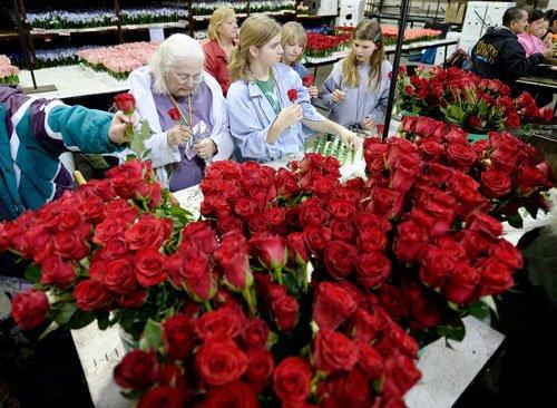 Soon, express love via blue roses
