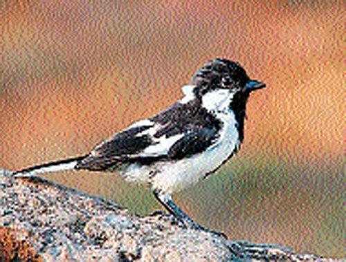Wesley Bird Sanctuary proposed in the region