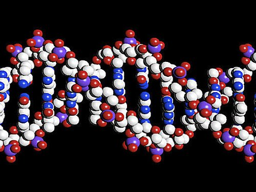 Male chromosome is not dying out: study