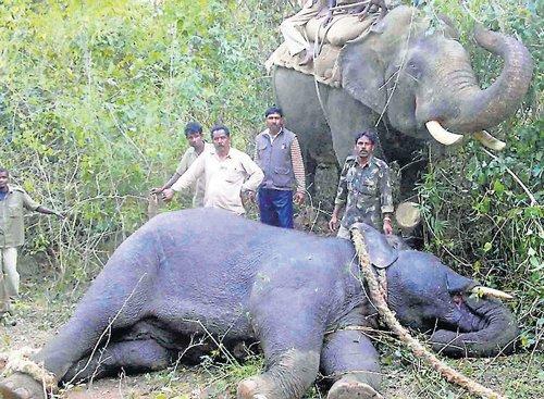 Elephant spotted, tahsildar has miraculous escape
