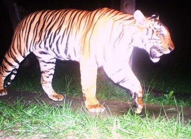 TN: Man-eater tigress shot dead
