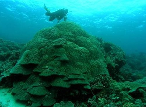 First cold-water coral reef discovered off Greenland