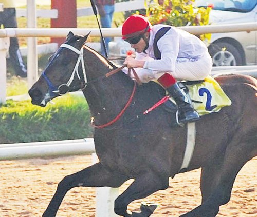 Murioi tipped to land spoils in Indian Derby