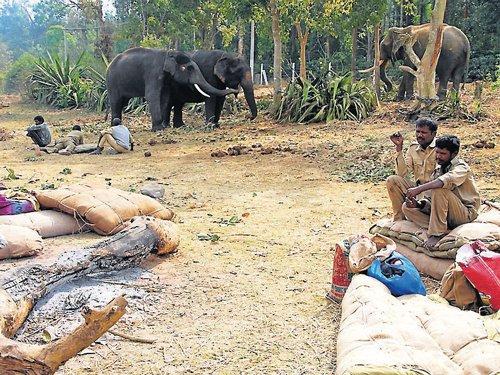 Operation jumbos begin; male elephants prime target