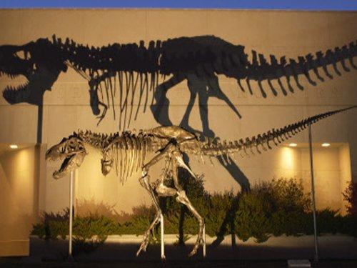 70-million-year-old deadly dinosaur found in Alaska!
