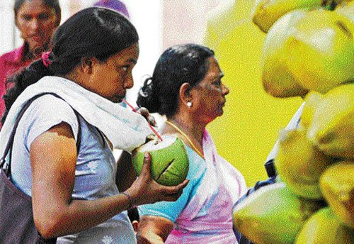Tender coconut prices shoot up as supplies fall