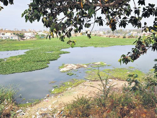 Curb vested interests to save wetlands
