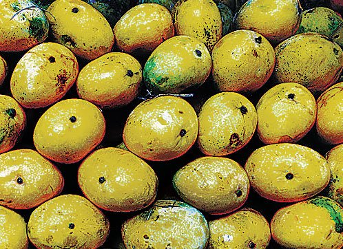 Mango price may not tickle taste buds