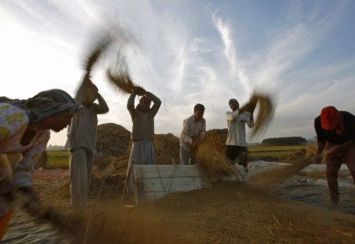 Record grain output of 264 mn tonnes will help new govt