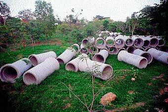 MCC to axe 367 trees near lake