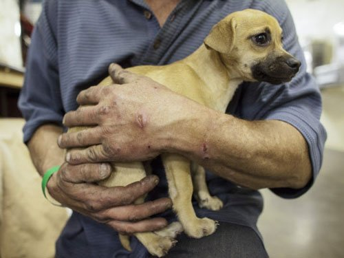 Chinese man smashes 7 newborn puppies to death, sparks anger