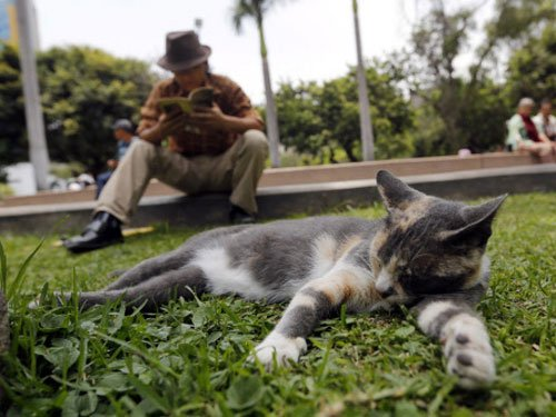 Cat owners smarter than dog lovers?