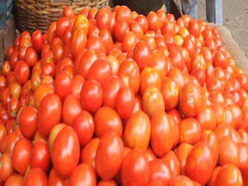 Four tomatoes a day may reduce kidney cancer risk: Study