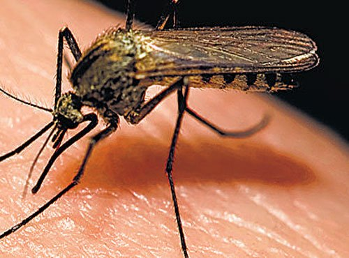 Rs 8 cr allotted for mosquito control measures
