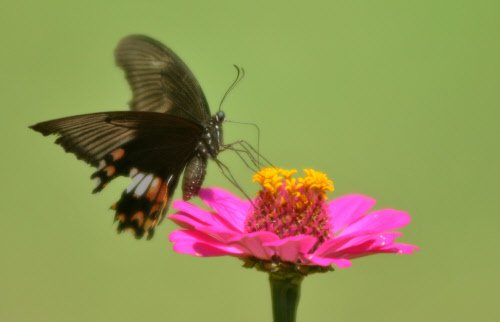 Butterfly population has reduced in City: Study