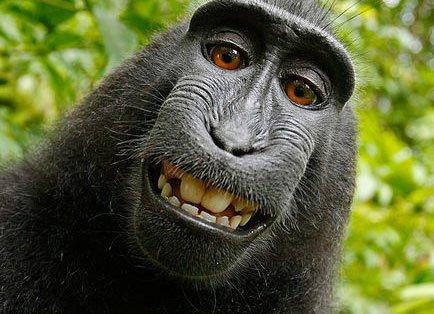 Monkey selfie sparks copyright row