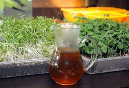 Greenpeace study finds high dose of pesticides in tea