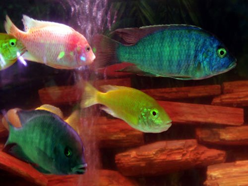 India's first fish hospital to come up in Bengal