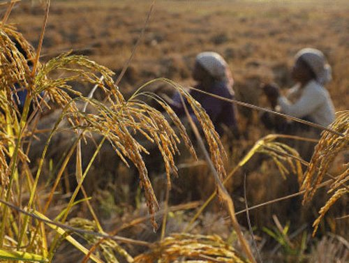 Assocham for allowing field trials in GM crops