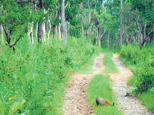 Trekking routes in Karnataka  forests to be open to all again