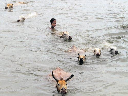 Floods ravage Assam as toll reaches 7