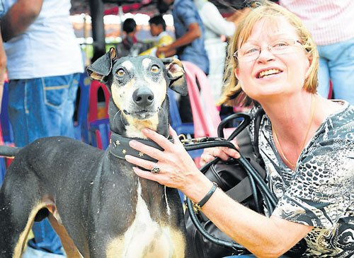 Dog-lovers raise concern on perishing Indian breeds