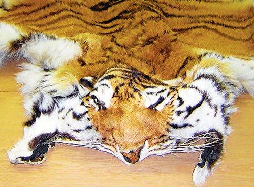 Military units seek to display seized tiger skins as trophies