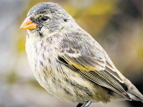 In Darwin's evolutionary footsteps