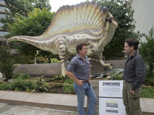 World's first swimming dinosaur found in Morocco