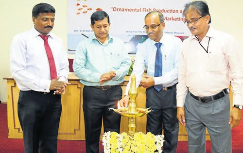 'Tap potential of Ornamental fish business'