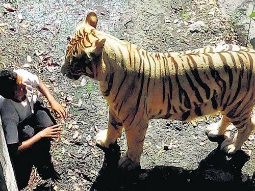 No public witness to Delhi zoo tragedy