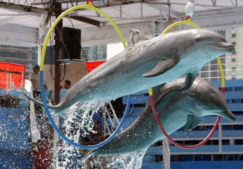 Dolphins are attracted to magnets: study