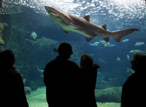 Sharks have social personalities: study