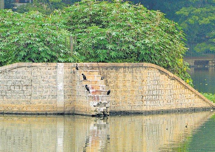 Sewage contaminates Ulsoor  lake as wall collapses