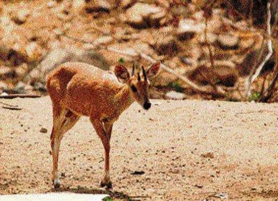 3 new species join Bannerghatta park