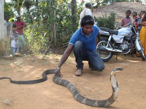 Anti-snake venom in short supply