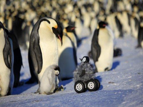 Penguin bot helps study shy antarctic birds
