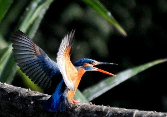 10 bird sanctuaries in India critically threatened: Report