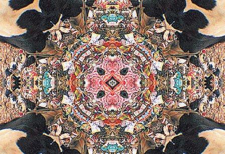 Kaleidoscopic twist to garbage menace